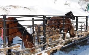 На базе можно организовать конные прогулки. Только мне не понятно куда.